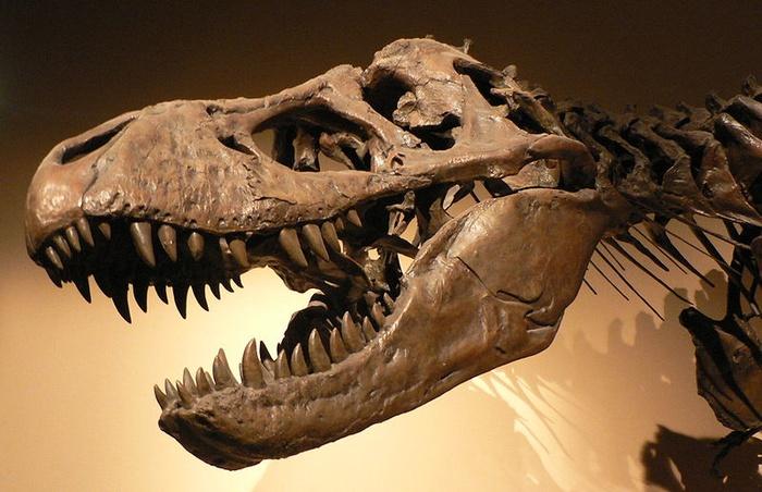 301240_erteTyrannosaurusrexp1050042_34.jpg